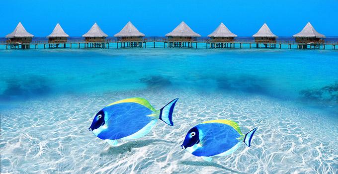 lune de miel maldives